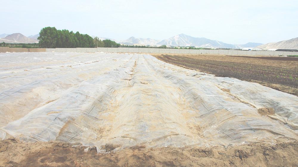 esterilizacion-de-suelos