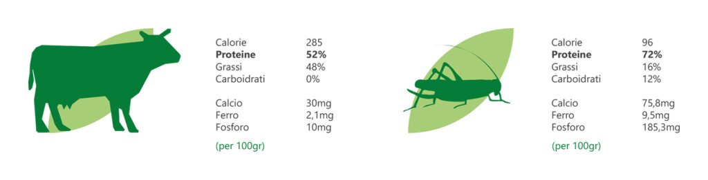 la cría de insectos para fabricar alimento para animales y personas