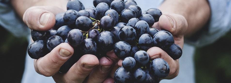 La huerta cuida de tu salud, agricultura ecológica