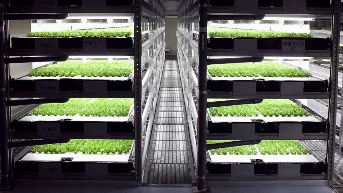 Estanterías en una granja interioe en las que crecen lechugas con iluminación artificial