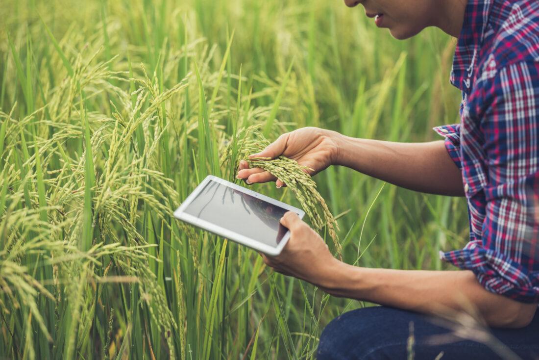Transformación digital en el sector agroalimentario